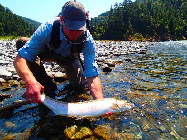A large Klamath steelhead